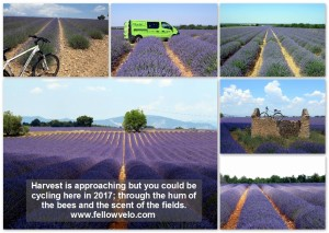 Lavender Field Email Collage-001
